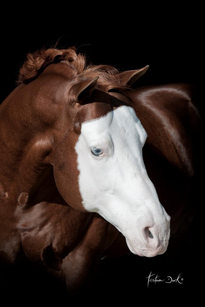 pferde blaue augen